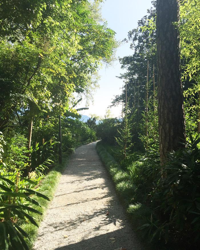 Grüner Waldweg: Neue Wege entstehen, in dem wir sie gehen!