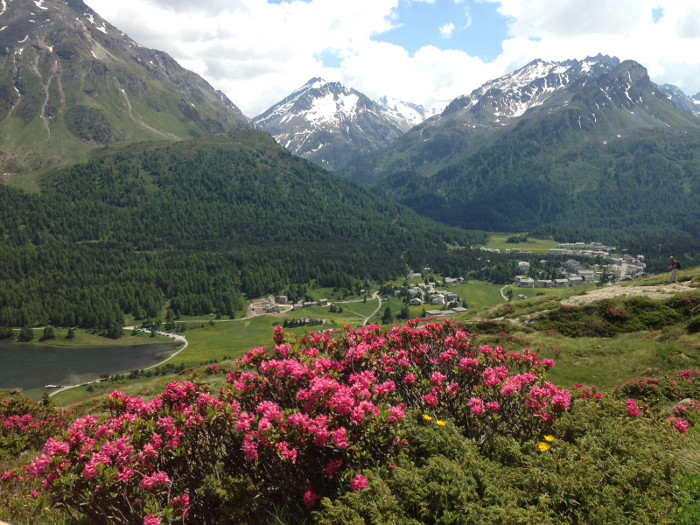 Sommerferien in den Bergen - tolle Aussicht und Pflanzenwelt